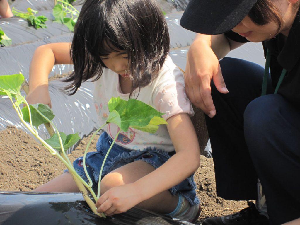 図書館でイモ植え体験