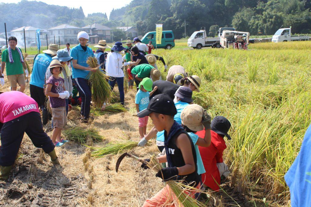 米づくり体験!収穫祭